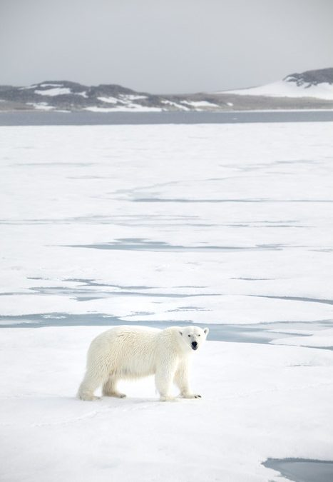 Svalbard/Norge