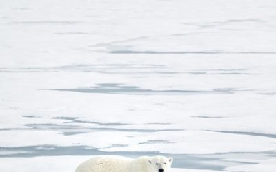 Svalbard / Norway