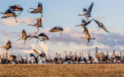 The cranes come with the spring